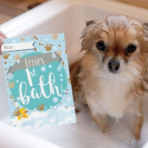 Personalised New Puppy Moment Cards
